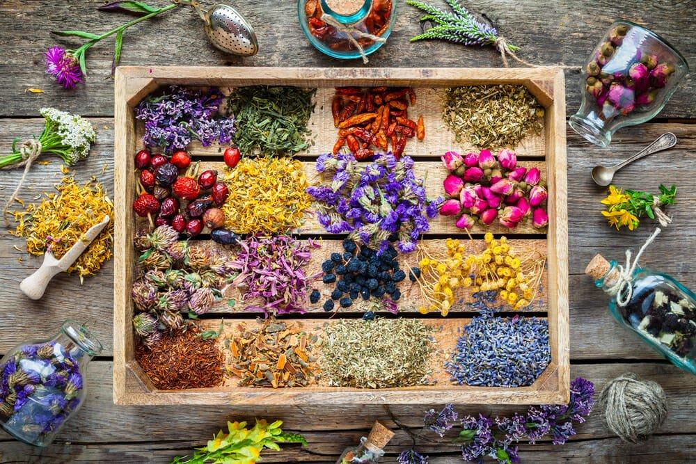 Photo of Erbe medicinali: l'elenco completo e la guida all'utilizzo