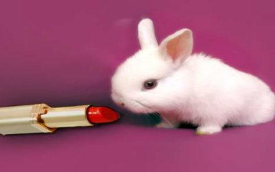 Test su animali per cosmetici vietati? Non è proprio così