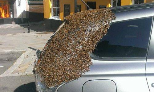 Photo of Le api inseguono un'auto per due giorni per salvare la loro regina