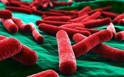 Escherichia coli: cos'è e come prevenire le infezioni