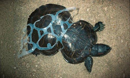 Photo of Gli anelli per lattine che non uccidono gli animali marini, ma li nutrono