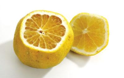 Mapo: frutto insolito con tante proprietà e ricette