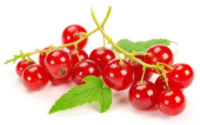 Ribes rosso: benefici, utilizzi e ricette