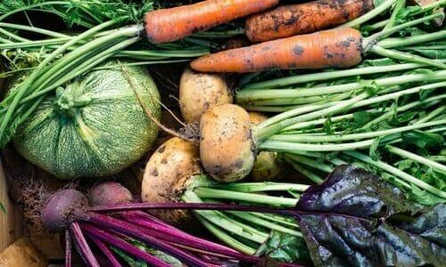 Photo of I lavori dell'orto di ottobre: cosa seminare, raccogliere e potare