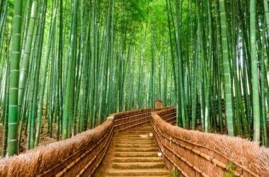 Il bambù, eco-materiale per costruire in modo green