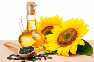 Olio di girasole: un ingrediente da scoprire