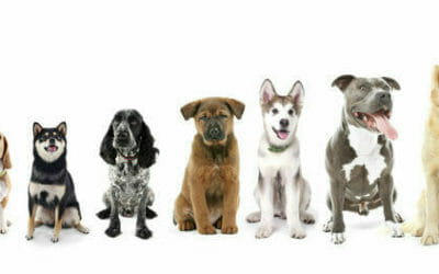 Cani taglia media: quali sono e per chi sono adatti