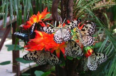 Tutto sulle farfalle: cose da sapere e curiosità poco note