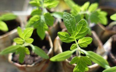 Riproduzione delle piante e tecniche di moltiplicazione