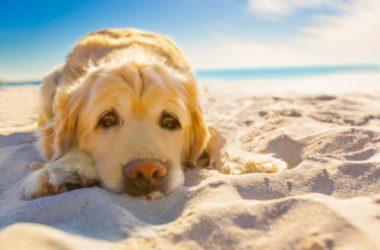 Come proteggere il nostro cane dal caldo e dall'afa?
