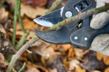 I lavori dell'orto di novembre: cosa seminare, raccogliere e potare