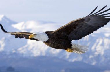 Earthflight BBC: il volo dell'aquila a caccia di fenicotteri