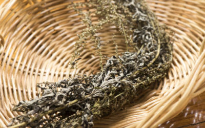 Artemisia: proprietà e controindicazioni