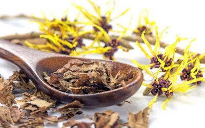 Tutti gli usi ed i benefici dell'amamelide, una vera pianta della salute