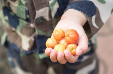 Scopriamo l'acerola, un frutto ricco di vitamine e minerali, utile per la salute