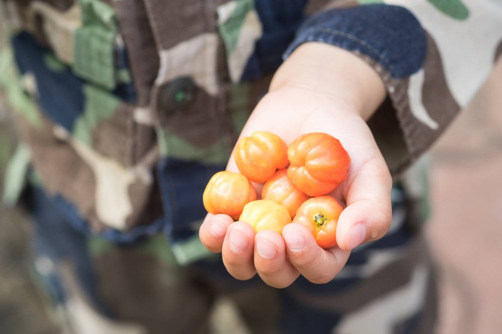 Photo of Scopriamo l'acerola, un frutto ricco di vitamine e minerali, utile per la salute