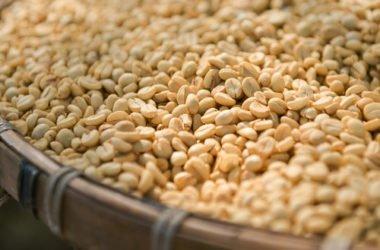 Caffè verde proprietà e come si utilizza