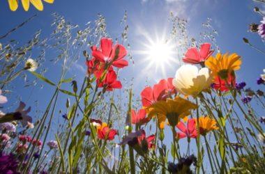 Cosa sono i fiori di Bach e come usarli: la guida alla floriterapia