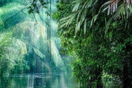 Una bella istantanea del Parco Nazionale Tortuguero