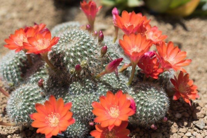 Piante grasse come curarle in modo facile e naturale for Foto piante grasse particolari
