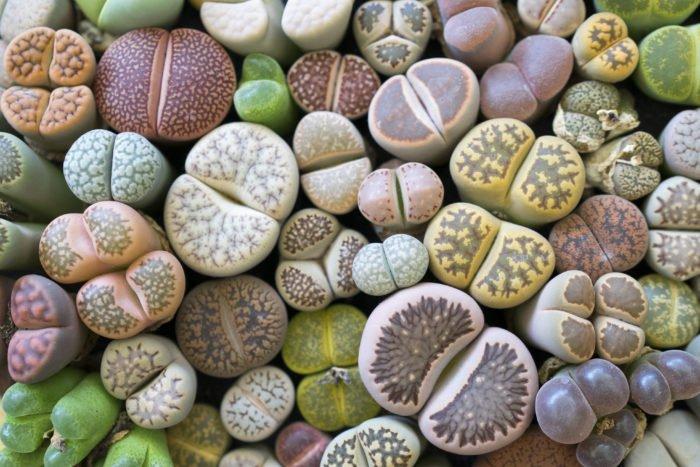 Piante Grasse Come Curarle In Modo Facile E Naturale Tuttogreen