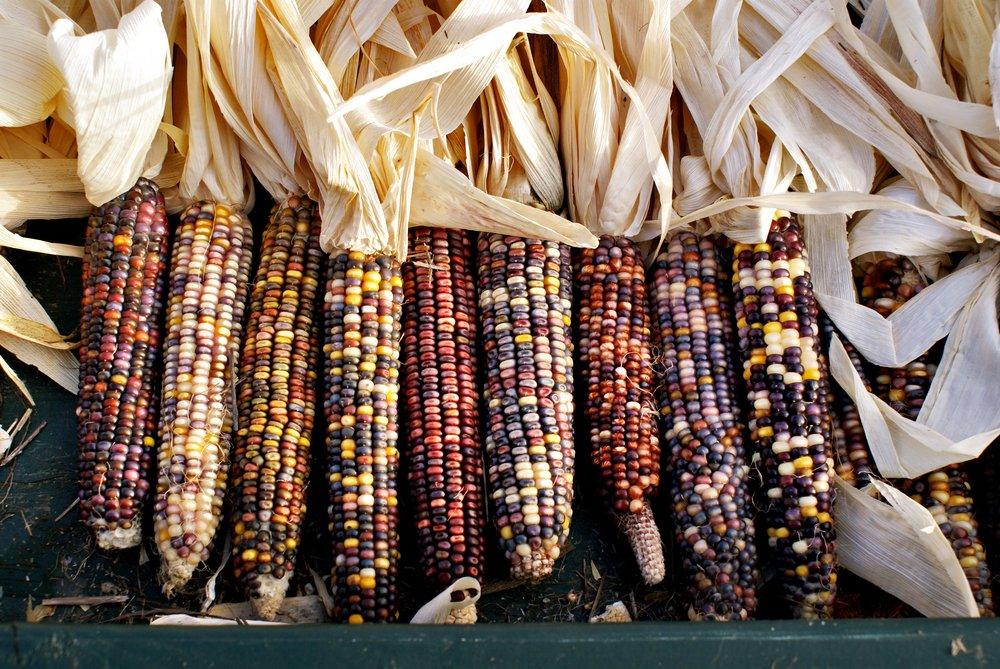 Photo of Il mais, quali sono le sue proprietà e gli utilizzi