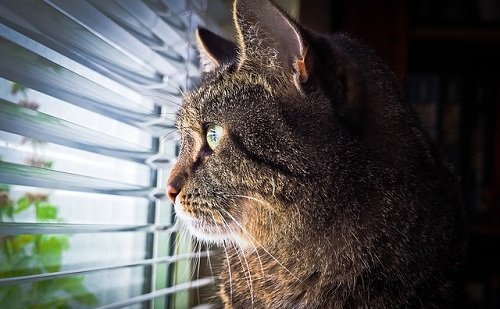 Photo of I regolamenti relativi ad animali e condominio: tutto quello che c'è da sapere