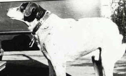 Photo of Fido cane coraggioso, conoscete la vera storia?