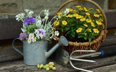 3 tipi di orto-giardino da coltivare subito