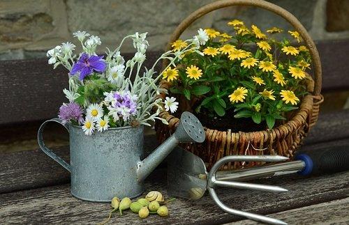 Photo of 3 tipi di orto-giardino da coltivare subito