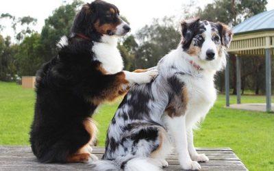 Anche gli animali avranno diritto alla mutua
