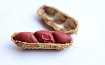 Come coltivare arachidi in vaso: la guida pratica