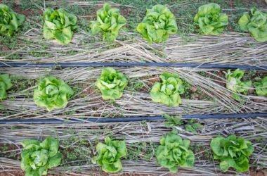 Cos'è la permacultura e quali sono i suoi principi