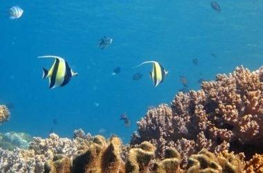 """Allarme Greenpeace: la barriera corallina """"sta friggendo"""""""