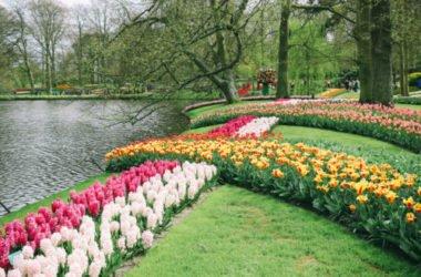 Keukenhof: il trionfo dei tulipani nel giardino floreale più grande d'Europa