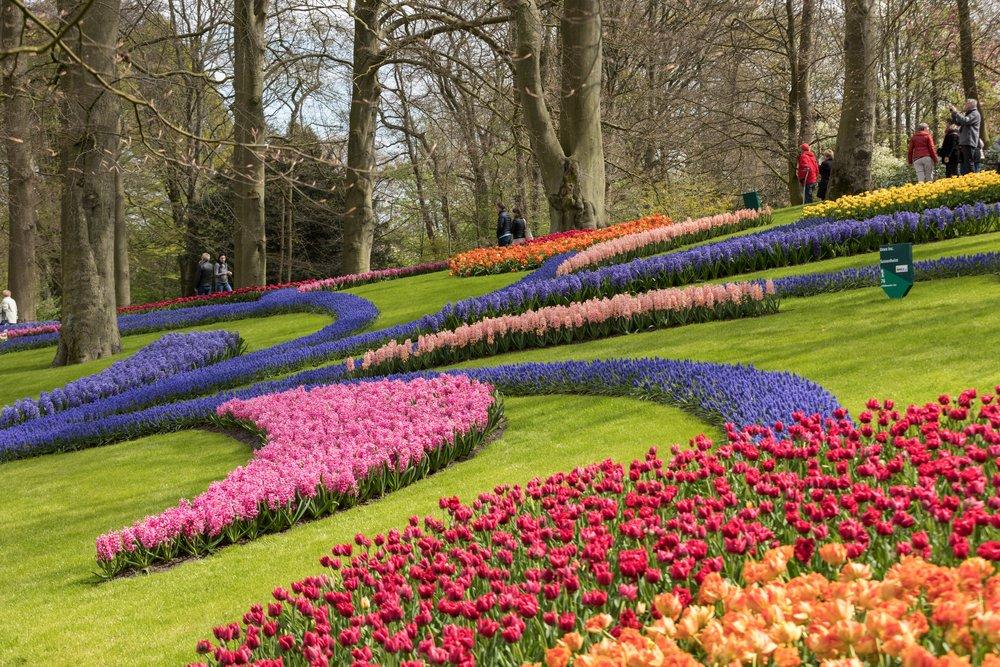 Photo of Keukenhof: il trionfo dei tulipani nel giardino floreale più grande d'Europa