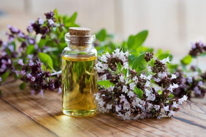 olio essenziale di origan