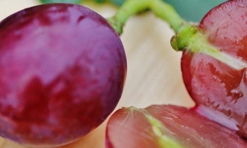 Photo of Tutto sul tannino, una difesa dalle piante che serve per tingere i tessuti, e si trova anche nel vino, nella birra e altre bevande