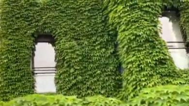Photo of Come ti rinnovo una brutta facciata con un giardino verticale