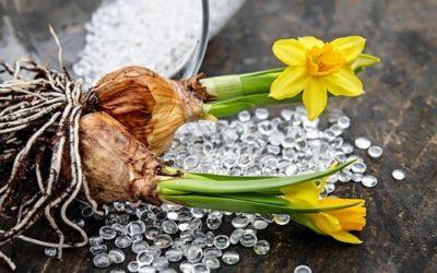 Come coltivare bulbi: tipologie, cure e consigli pratici