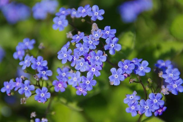 10 fiori primaverili facili da coltivare tuttogreen for Fiori primaverili da giardino