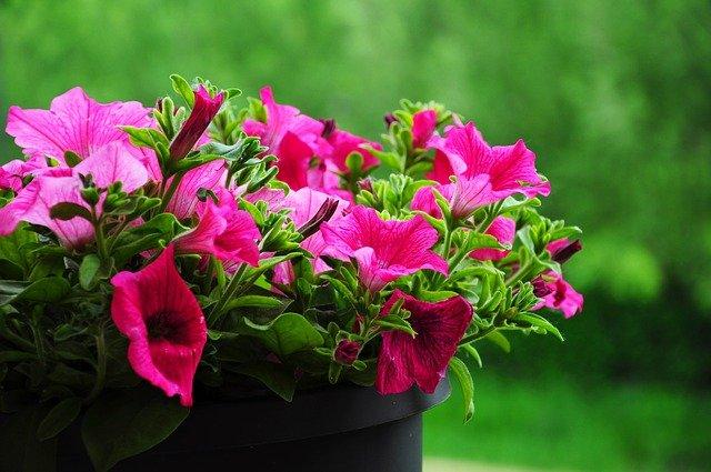 Fiori primaverili quali sono e come curarli per avere un for Fiori primaverili da giardino