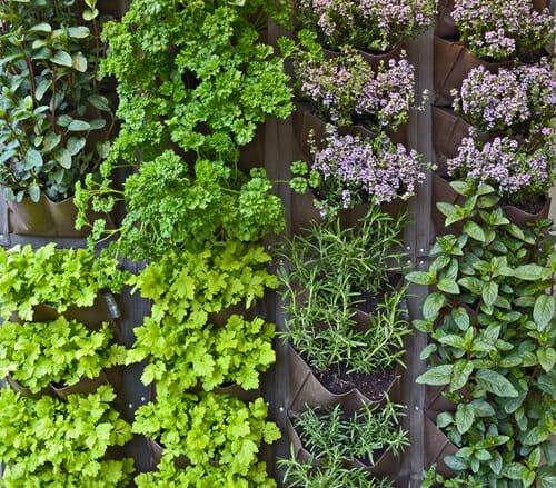 Photo of Erbe aromatiche: coltivare e raccogliere le piante aromatiche