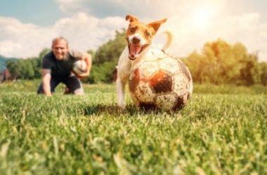 Dog fitness, la ginnastica con il cane