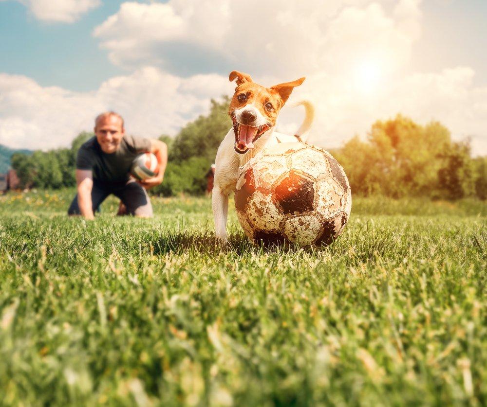 Photo of Dog fitness, la ginnastica con il cane