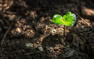 iPlanta, progetto UE per salvare le piante dai virus