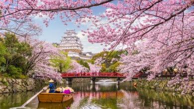 Photo of Hanami ovvero ammirare gli alberi in fiore in primavera