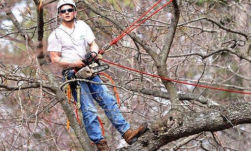 Photo of Tree climbing o arboricoltura: cos'è e come diventare arbonauta