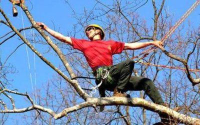 Tree climbing o arboricoltura: cos'è e come diventare arbonauta