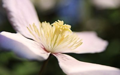 Ecco 5 fiori estivi facili da coltivare tuttogreen for Fiori estivi perenni